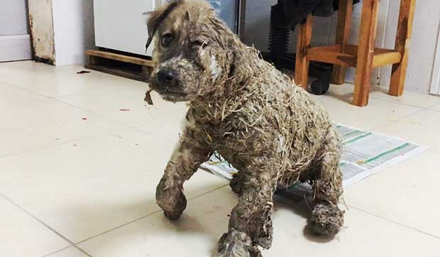 puppy drowned in glue