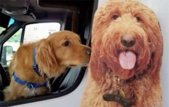 cardboard dog cutout