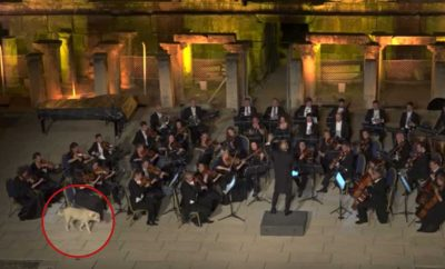 dog interrupts live orchestra