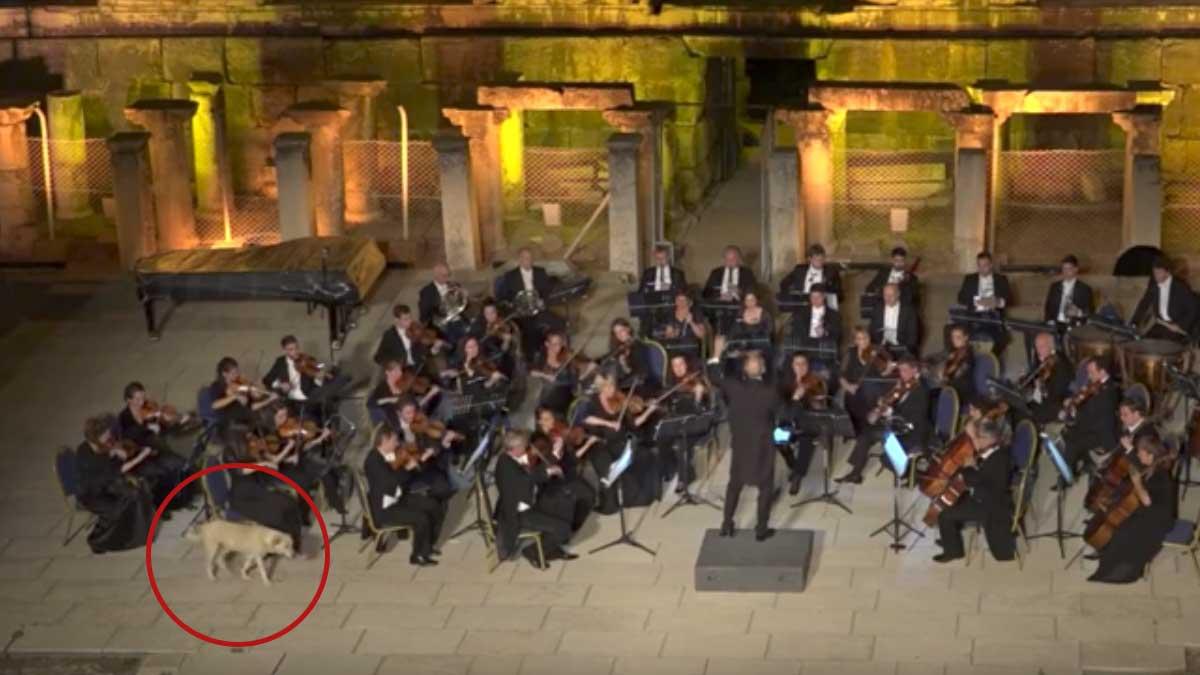 dog interrupts live orchestra
