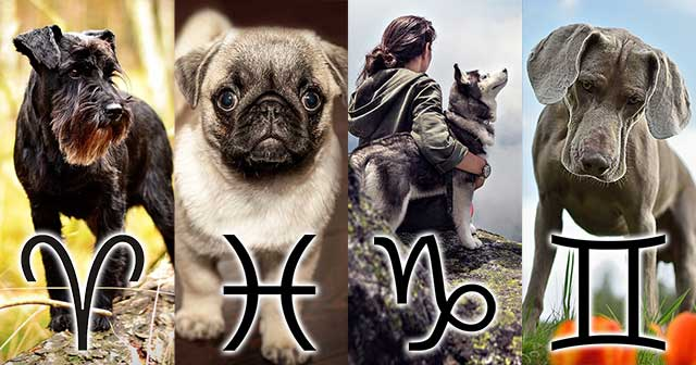 perfect dog breed zodiac