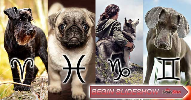 perfect dog breed zodiac