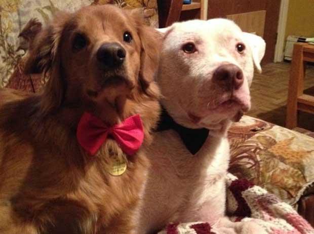 rescue dog with mange