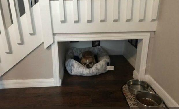 dog's room