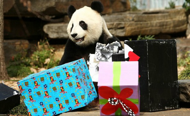 Giant Pandas Celebrate Their Birthdays Around The World