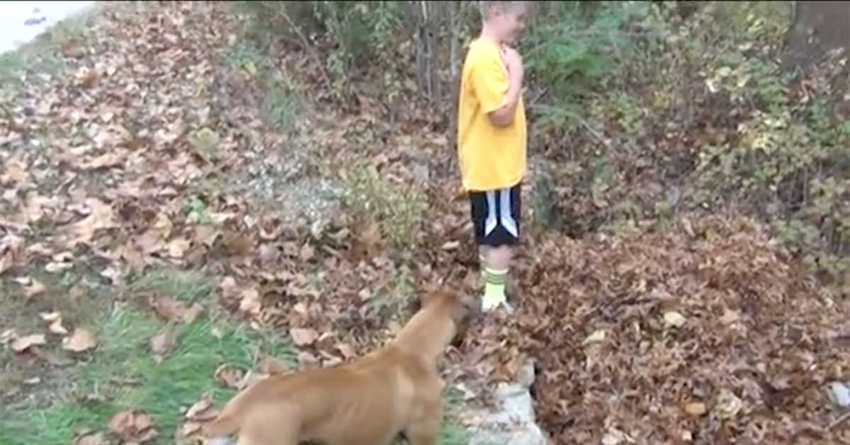 dog jumps into leaves