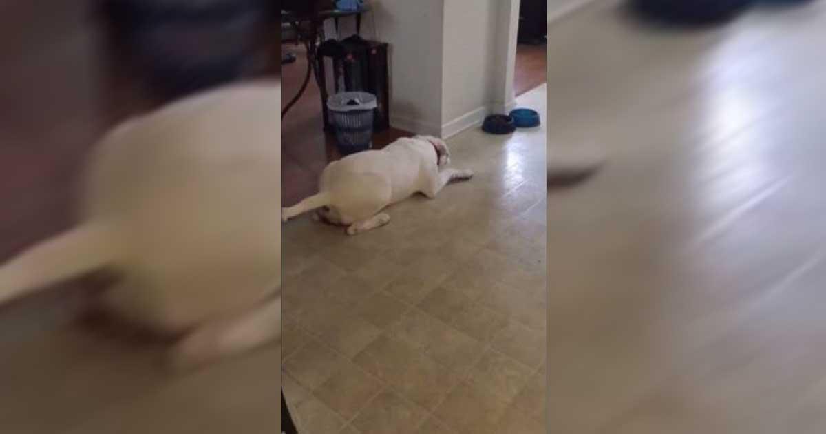 dog's tantrum