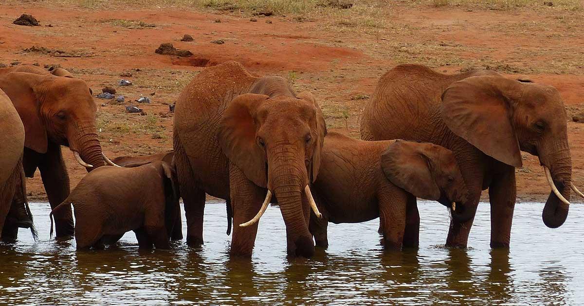 elephant wears shoes
