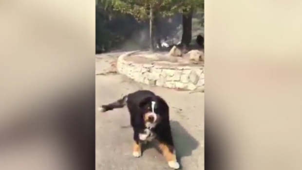 wildfires missing dog