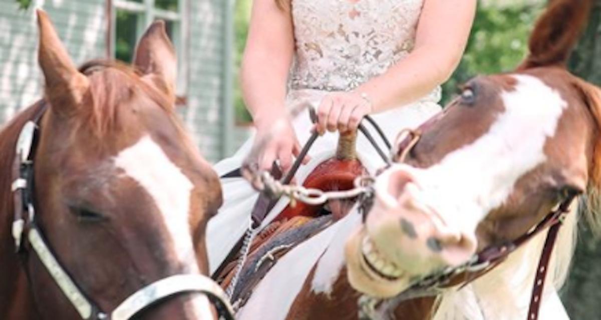 Patti Womer horse wedding