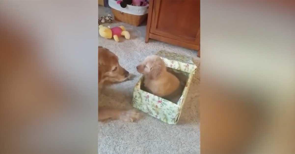new puppy present